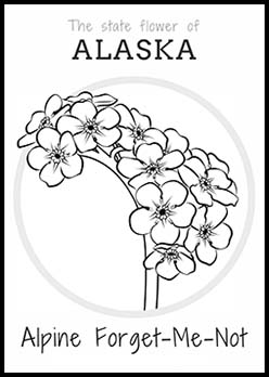 Free Alaska State Flower Coloring Page | Alpine Forget Me Not
